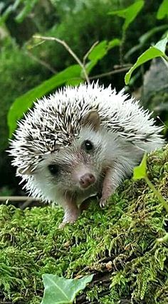 In a perfect world, every hedge would have an adorable little hedgehog!