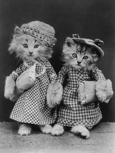 """cats   MY GRANDMOTHER HAD A NEATO """"CAT"""" BOOK----IT WAS VERY OLD…..ALL THE CATS WERE  IN PEOPLE CLOTHES.....THIS PICTURE WAS IN THE BOOK.......ccp"""