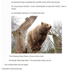 Funny pictures about The Scientific Name Of The Bear. Oh, and cool pics about The Scientific Name Of The Bear. Also, The Scientific Name Of The Bear photos. My Tumblr, Tumblr Posts, Tumblr Funny, Funny Memes, Funny Videos, Funny Cute, The Funny, Hilarious, Super Funny