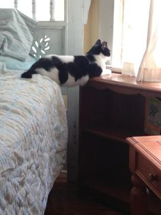 Cat Sitting On Glass Table | sure what's going on here…[Image: A black and white cat sitting ...