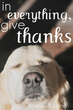 White Lab Give thanks
