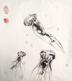 Chrysaora Jellyfish