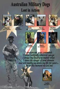 """""""Tribute to Australian Military Dogs Lost in Action"""""""