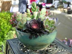 Love this beautiful pottery which showcases the succulent hues brilliantly.  This was taken at the Pelican Open Air Market in Newport Beach.