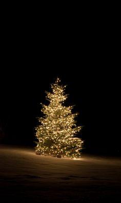 Christmas tree joyeux nol pinterest christmas tree winter cleveland oh outdoor christmas tree lighting mozeypictures Gallery