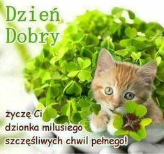 Herbs, Ha Ha, Facebook, Random, Funny, Animales, Fotografia, Pictures, Deco