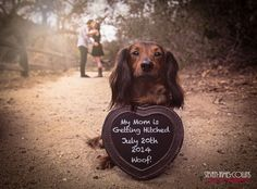 Fun Engagement Photo with Mini Dachshund (Doxie) Dog Holding Announcement Sign (Save the date) www.stevenjamescollins.com