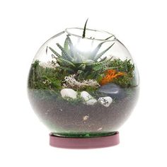 Table Terrarium Purple, 15€, now featured on Fab.