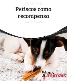 Petiscos como recompensa  Dar #petiscos como #recompensa aos #cães é uma das estratégias de reforço positivo mais utilizadas.  #ALIMENTAÇÃO