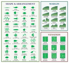 Know your leaf morphology terms!  Thanks, Wikipedia :)