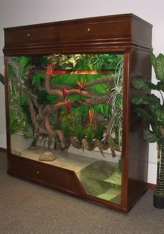 Tropical cage with pool possible for arboreal reptiles or amphibians
