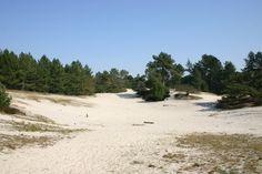 More sand dunes at Schoorl, Holland.