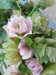 Avril au jardin 053