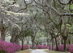 Savannah, GA ~ Beautiful!