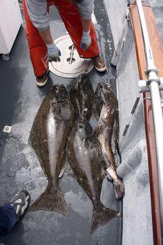Join us for Juneau Fishing Charters that focus on Salmon, Halibut, and Rockfish. Halibut Fishing, Giant Fish, Fishing Hole, Rockfish, Fishing Charters, Catfish, Delish, Salmon, Seafood