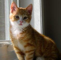 Oscar of the Sesame Street Kittens (4/13/2015)