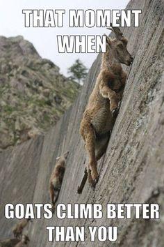 That moment when goats climb better than you. Rock climbing/bouldering. heehee!