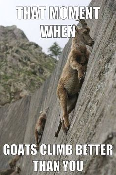 That moment when goats climb better than you. Rock climbing/bouldering. heehee!