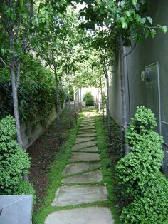 Side yard simplicity with columnar trees and groundcover. traditional landscape by Frank & Grossman Landscape Contractors, Inc.