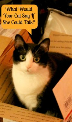 If your cat could talk, what would it say? http://makobiscribe.com/if-your-cat-could-talk-what-would-she-say/