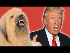 Presidential Candidates And Their Dog Twins - YouTube