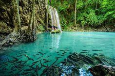 Uma linda perspectiva do Erawan National Park em Kanchanaburi mostrando a interação da fauna e da flora.  #calçathai #tailândia #peixe #cachoeira #natureza #culturatailandesa #beleza