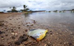 Pipe had leak months before Hawaii molasses spill