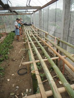 #Bamboo is used to set up the frame for a Hydroponic System at a local school