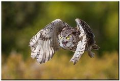 Owls, Animal Action, Animals, Bird, In This Moment, Animales, Animaux, Birds, Owl