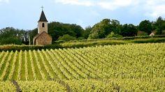 Beaujolais Vineyards, Burgundy, France