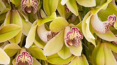 MKB Fotografie for Valstar Orchidee. Photography Business, Fruit, Plants, Food, Fotografie, Essen, Meals, Plant, Yemek