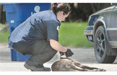 Canada Post lauds dog attack heroes