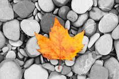 Autumn leave | Høstens energi Purodeco Feng Shui