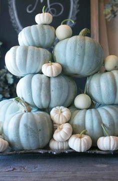 Pale Blue Pumpkins