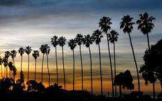 Palm tree silhouettes.
