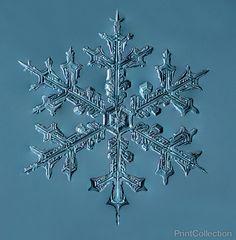 Stellar Dendrite Snowflake 002.03.24.2014