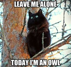 Are you looking for really funny black cat memes? Look no further, we've gathered funny black cat memes just for you to share on your social media accounts Cute Cat Gif, Funny Cute, Cute Cats, Adorable Kittens, Scary Funny, Fancy Cats, Super Funny, Hilarious, Funny Animal Pictures