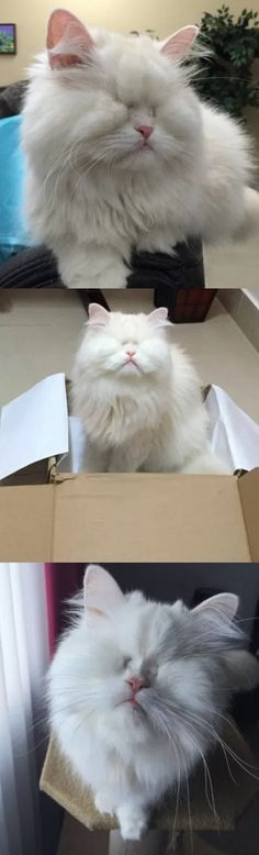 This Cat Is Blind Due To Neglect. When She Feels Love For The First Time? WOW!