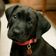 Black lab......just super great dogs!!