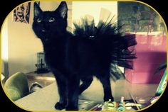 Really funny cat tutu. As I always say, any day is a good day if you can wear a tutu.