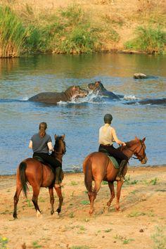 A la rencontre des hippopotames d'Afrique du Sud #cheval #voyage