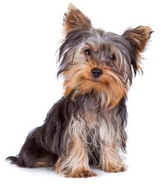 A few cute Yorkie puppy names for girls or boys might be...Minuet for a dainty girl, Rambo for the take charge boy, or Saucy for the Yorkie that's a flirt. Here's more ideas... http://www.dog-names-and-more.com/Yorkie-Names.html