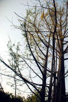 See the branches,winter is coming.