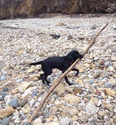 Foto de cão 'buscando' pedaço de pau enorme em praia faz sucesso na web (Foto: Reprodução/Reddit/Gairb)