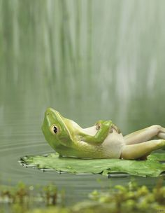 Frog relax