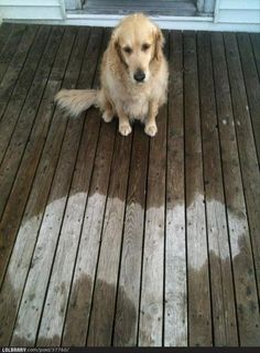 funny-pictures-dog-fell-asleep-in-the-rain.jpg 620×841 pixels