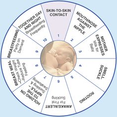 Breastfeeding Wheel: Steps to breastfeeding a premature infant. I wish I had seen this while we were in the NICU. I would have modified our skin to skin time! World Breastfeeding Week, Breastfeeding And Pumping, Preemie Babies, Premature Baby, Pediatric Nursing, Skin To Skin, Cute Baby Pictures, Precious Children, Midwifery