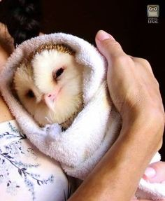 Sweet Adorable Baby Owls - World's largest collection of cat memes and other animals Owl Photos, Owl Pictures, Cute Birds, Cute Owl, Cute Little Animals, Cute Funny Animals, Beautiful Owl, Animals Beautiful, Cute Creatures