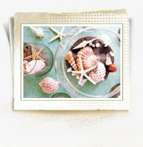 Seashells in fav colors