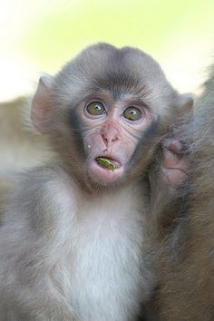 Baby 2015 in summer | Flickr - Photo Sharing! Cute Monkey, Primates, Cousins, Monkeys, Summer, Animals, Rompers, Summer Time, Animales